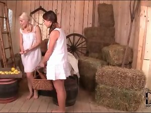 Pigtailed lesbians in the barn suck titties